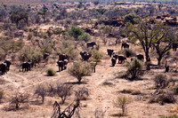 Elephants Approaching Water Hole